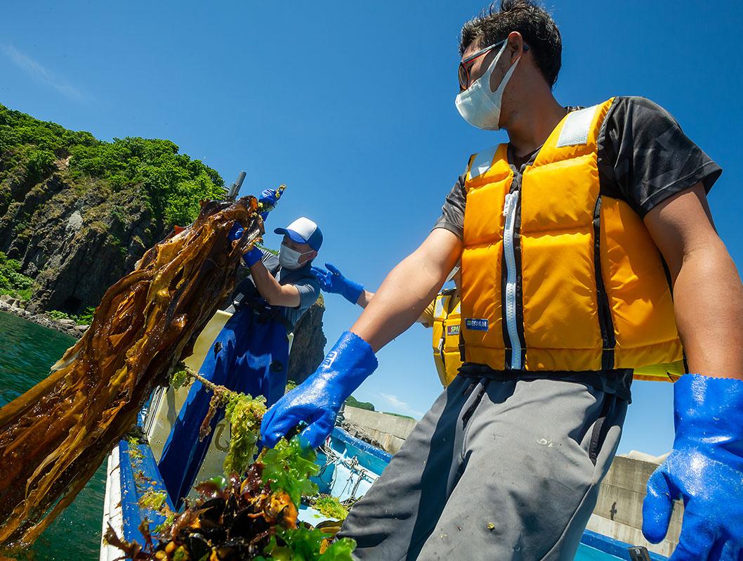 将来まで持続できるウニの生育環境、藻場づくり